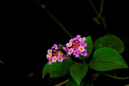 Free stock photo of beautiful flower, black background, flower, green