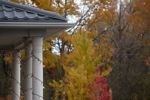 Безкоштовне стокове фото на тему «дах, дерева, естетика, кольори осені»
