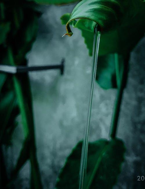 Free stock photo of dark, dark green plants, green, HD