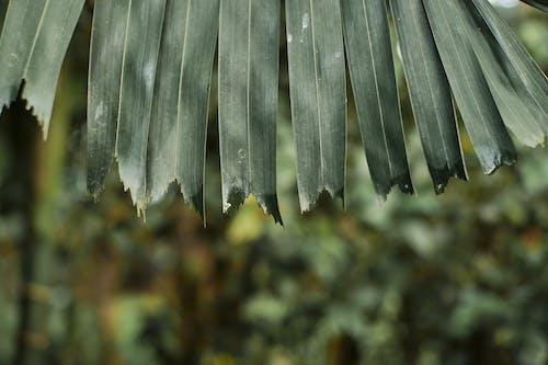 Бесплатное стоковое фото с абстрактное фото, замечательный, зеленый, красивый