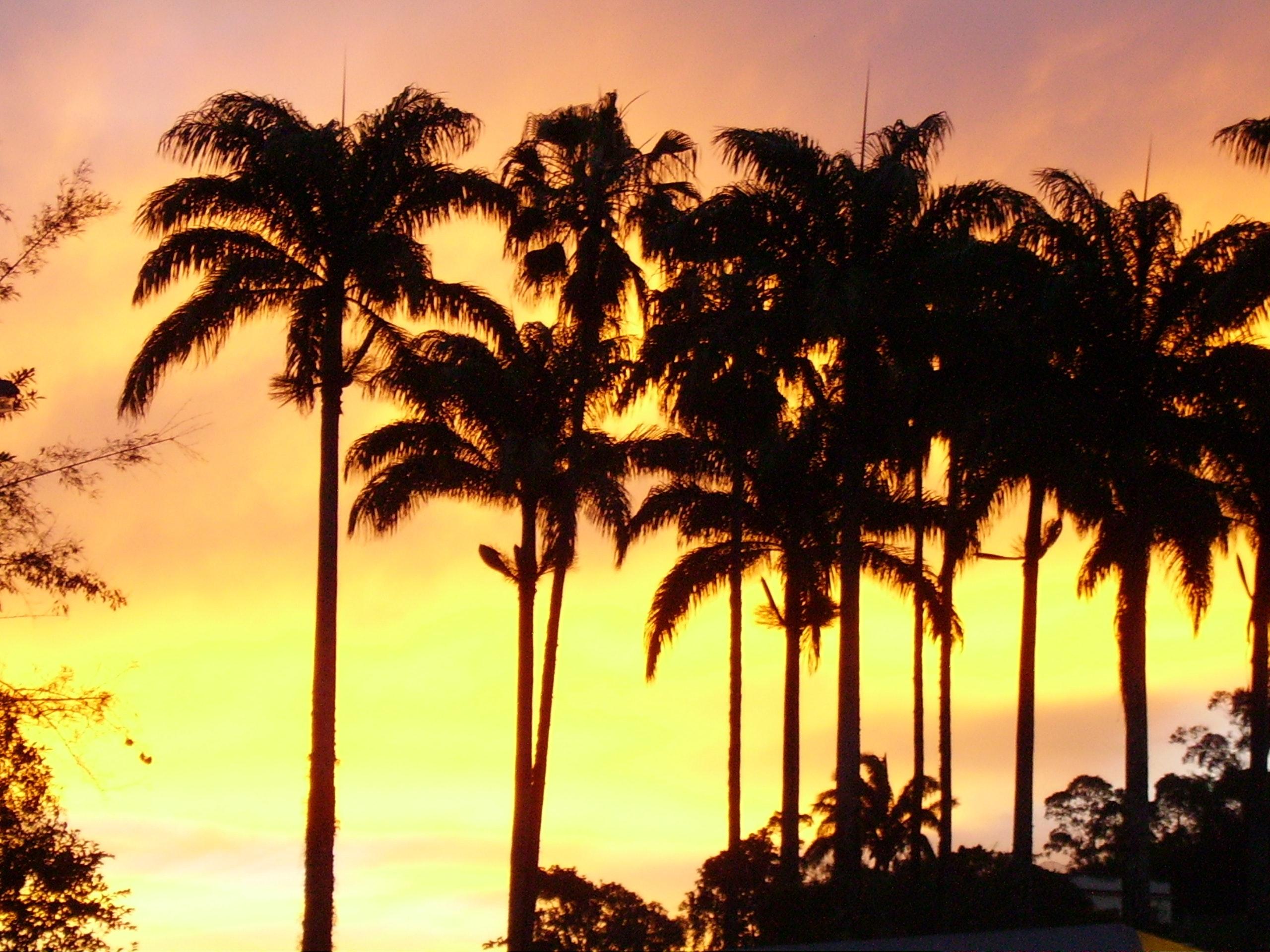 Foto Stok Gratis Tentang Matahari Keemasan Pohon Kelapa
