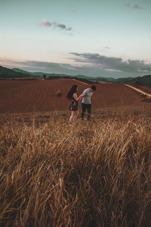 Fotos de stock gratuitas de amor, campo, campos de cultivo, césped
