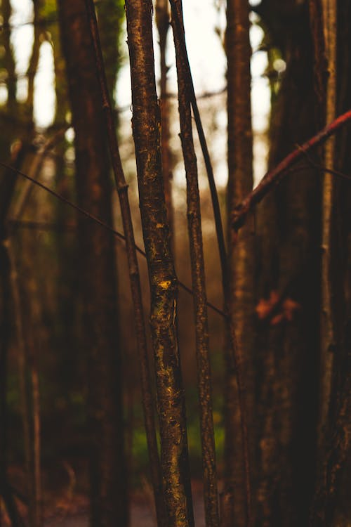 Free stock photo of beauty in nature, branches, brown, cold