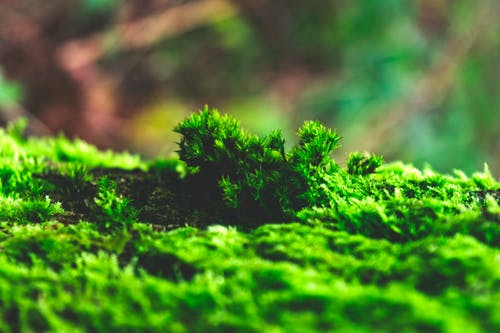 Free stock photo of details, moss, nature, winter