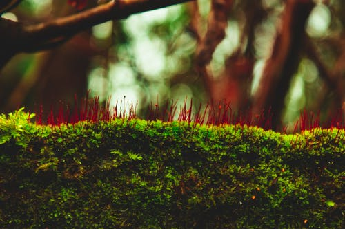 Free stock photo of beauty in nature, details, focus, green