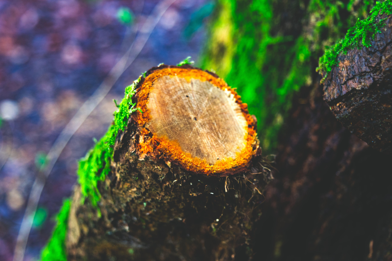 Δωρεάν στοκ φωτογραφιών με γαβγίζω, δασική έκταση, δασικός, δέντρο