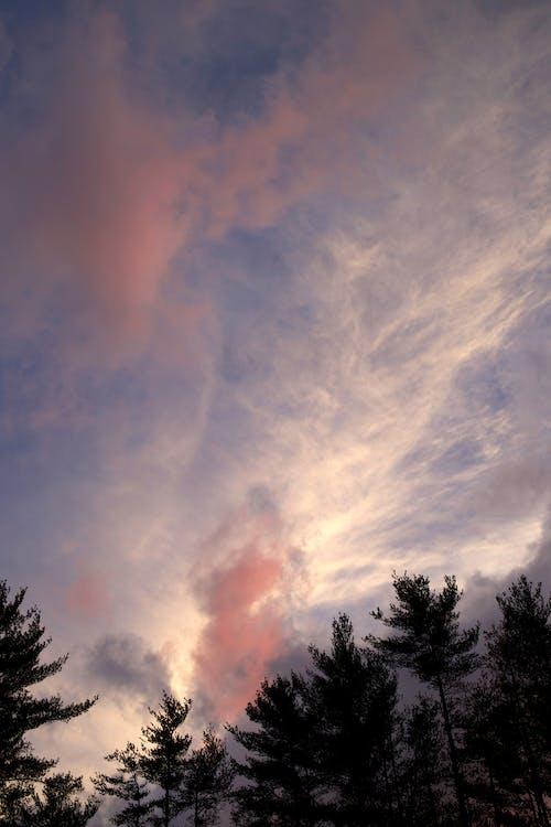 Foto stok gratis awan, langit, pohon