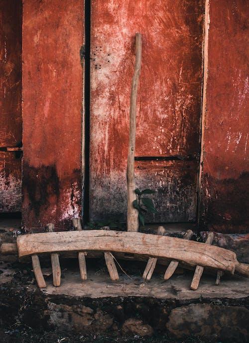 Kostnadsfri bild av bakgrund, färg, hand, odling