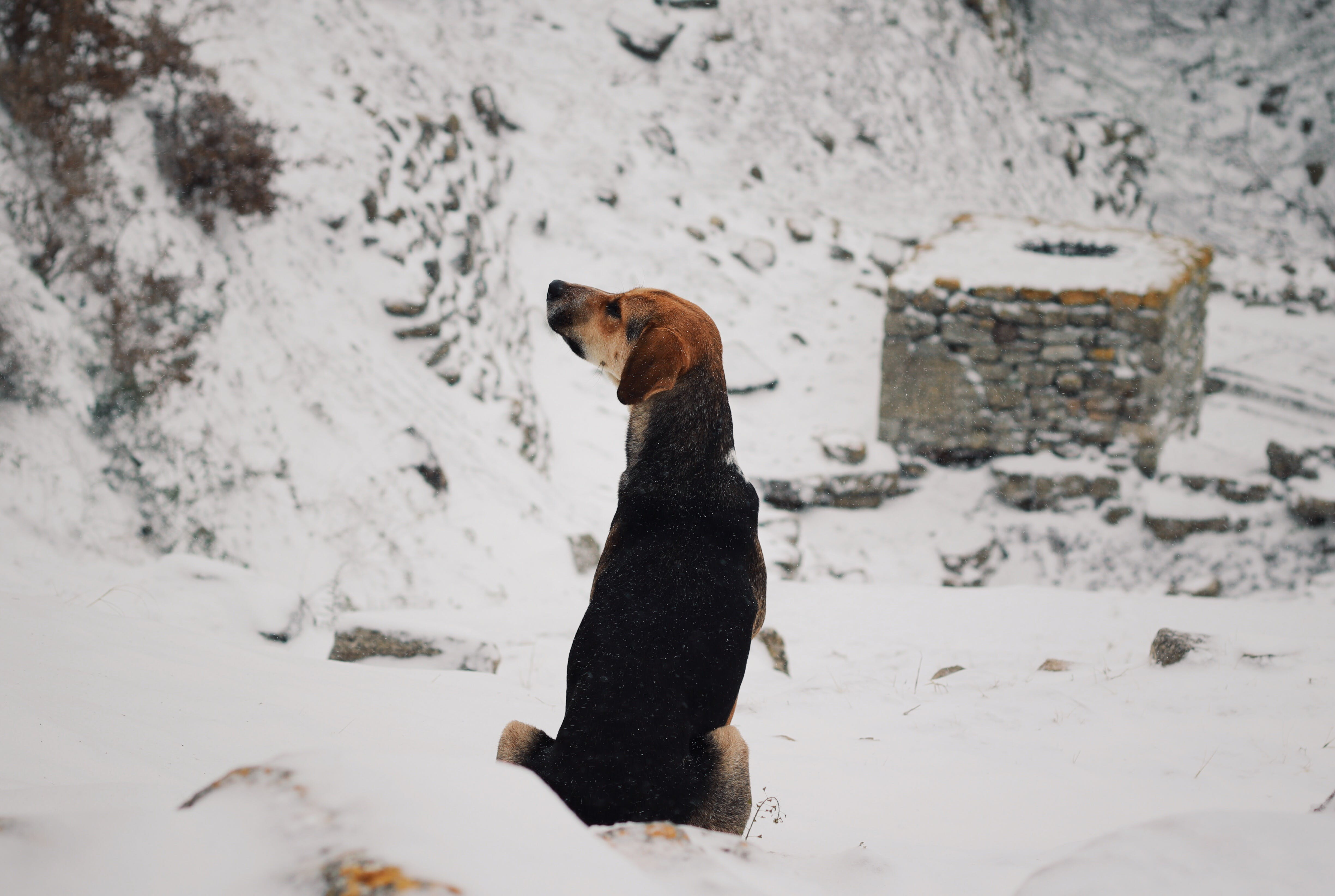 Free stock photo of beauty, cute, dog, nature
