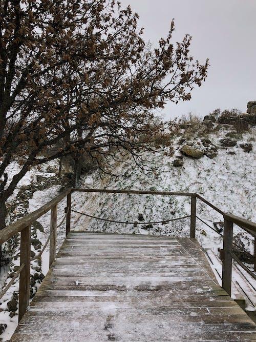 녹색, 눈, 수직의, 아름다움의 무료 스톡 사진