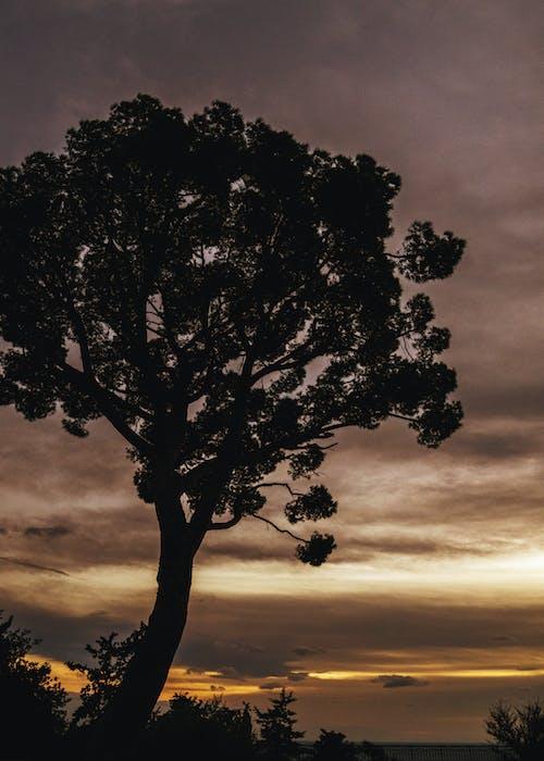 Základová fotografie zdarma na téma barevné nebe, příroda, silueta stromu, strom
