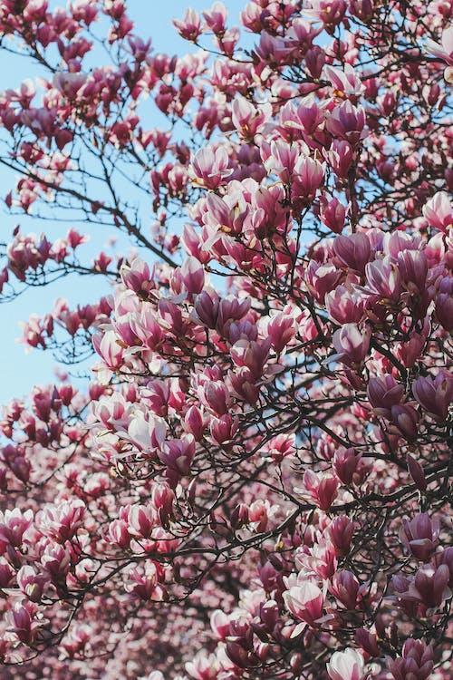 çiçek, çiçek ağacı, mavi içeren Ücretsiz stok fotoğraf