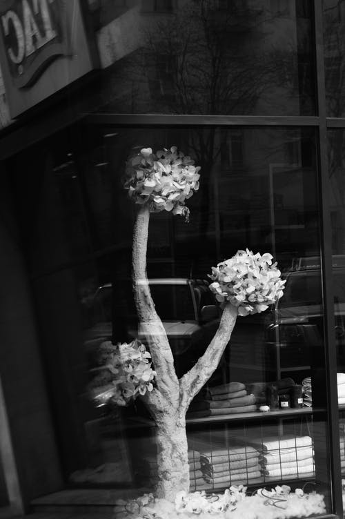 Grayscale Photography of Bonsai Plant by the Window