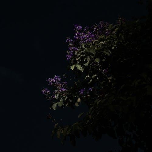 Free stock photo of beautiful flowers, darkness, iphone 6s