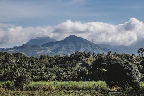 Ingyenes stockfotó kék hegyek, tájkép témában