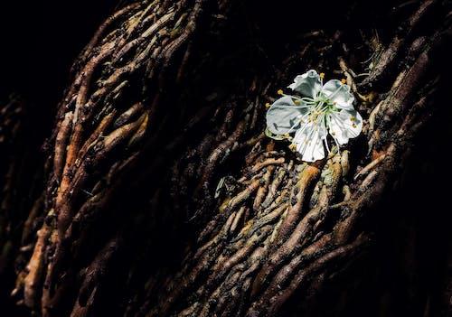 Základová fotografie zdarma na téma 4k, Afrika, bílá, černobílý