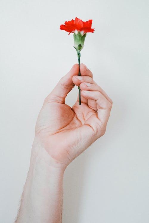 คลังภาพถ่ายฟรี ของ การเจริญเติบโต, จับ, พฤกษา, มือ