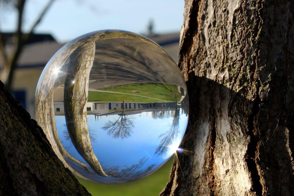 odraz, skleněná koule, stromy