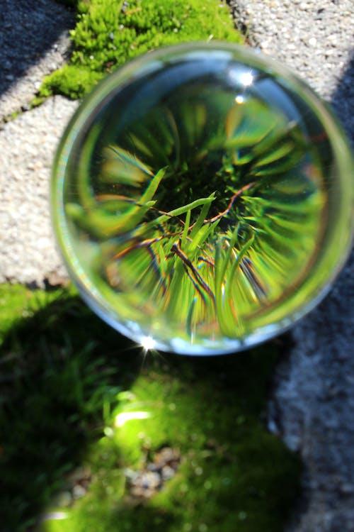 micro, muschio verde, sfera di vetro
