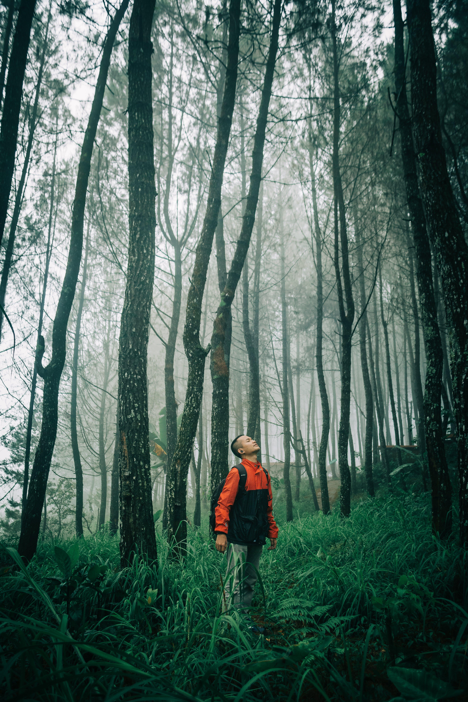 černý les, cesta, denní světlo