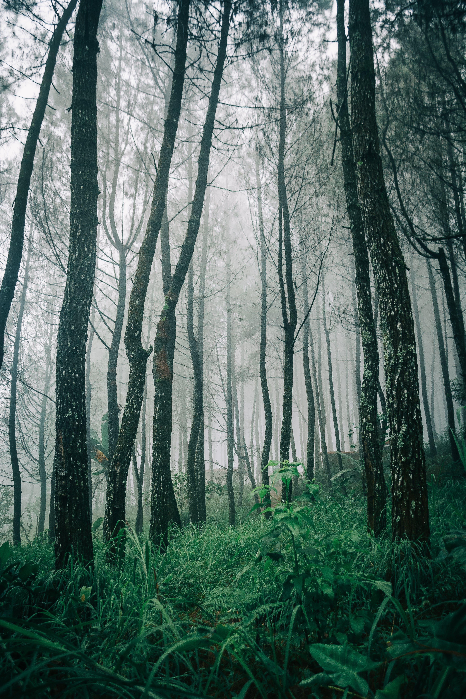 Fotos de stock gratuitas de amanecer, arboles, bañador, bosque