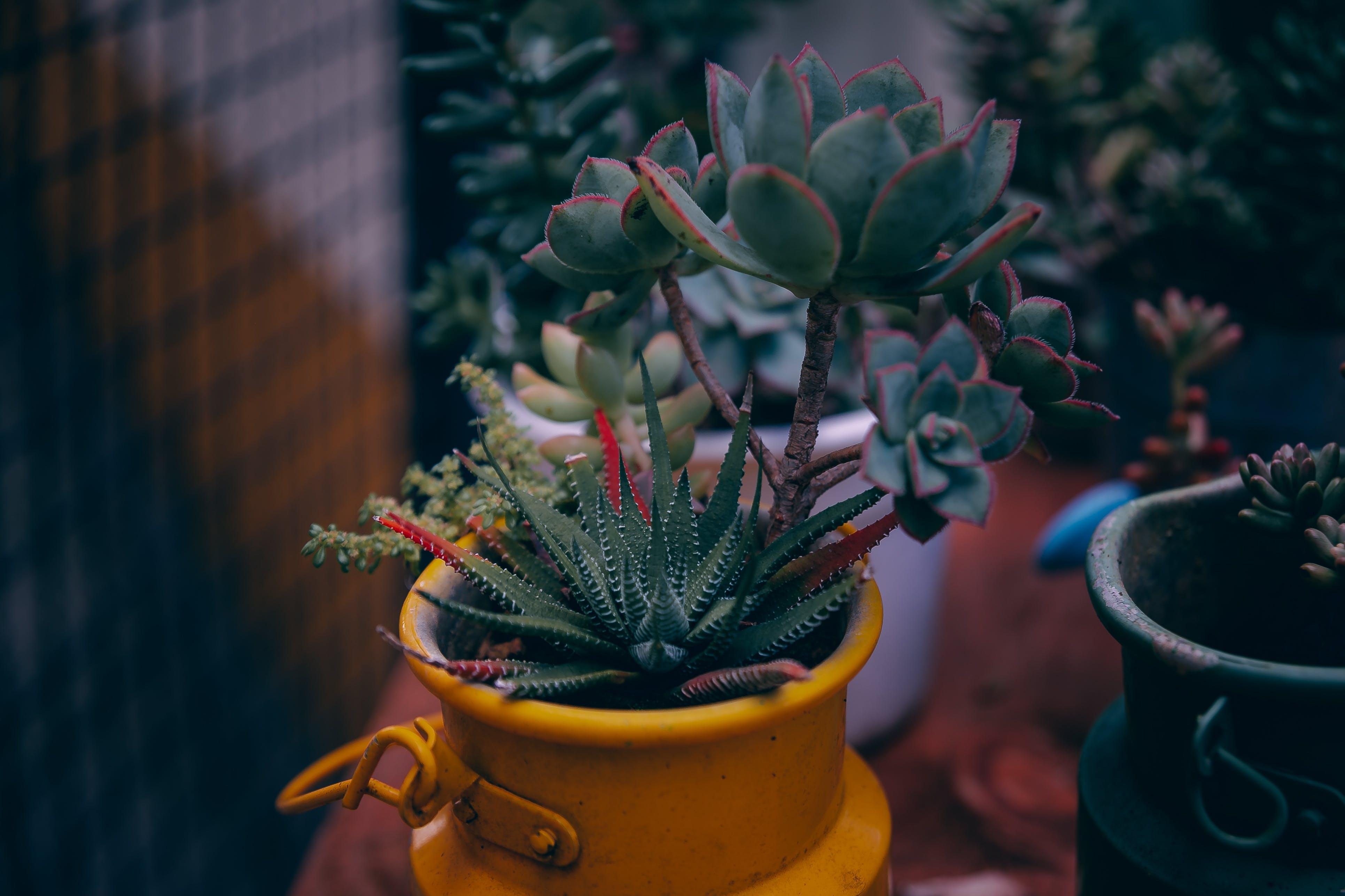 Green Succulent Plant Selective Focus Photography