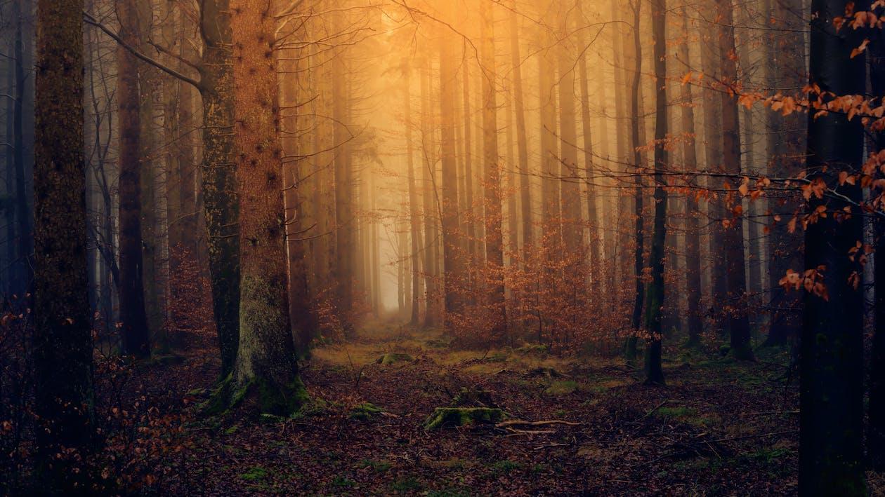kmeny, kmeny stromů, les