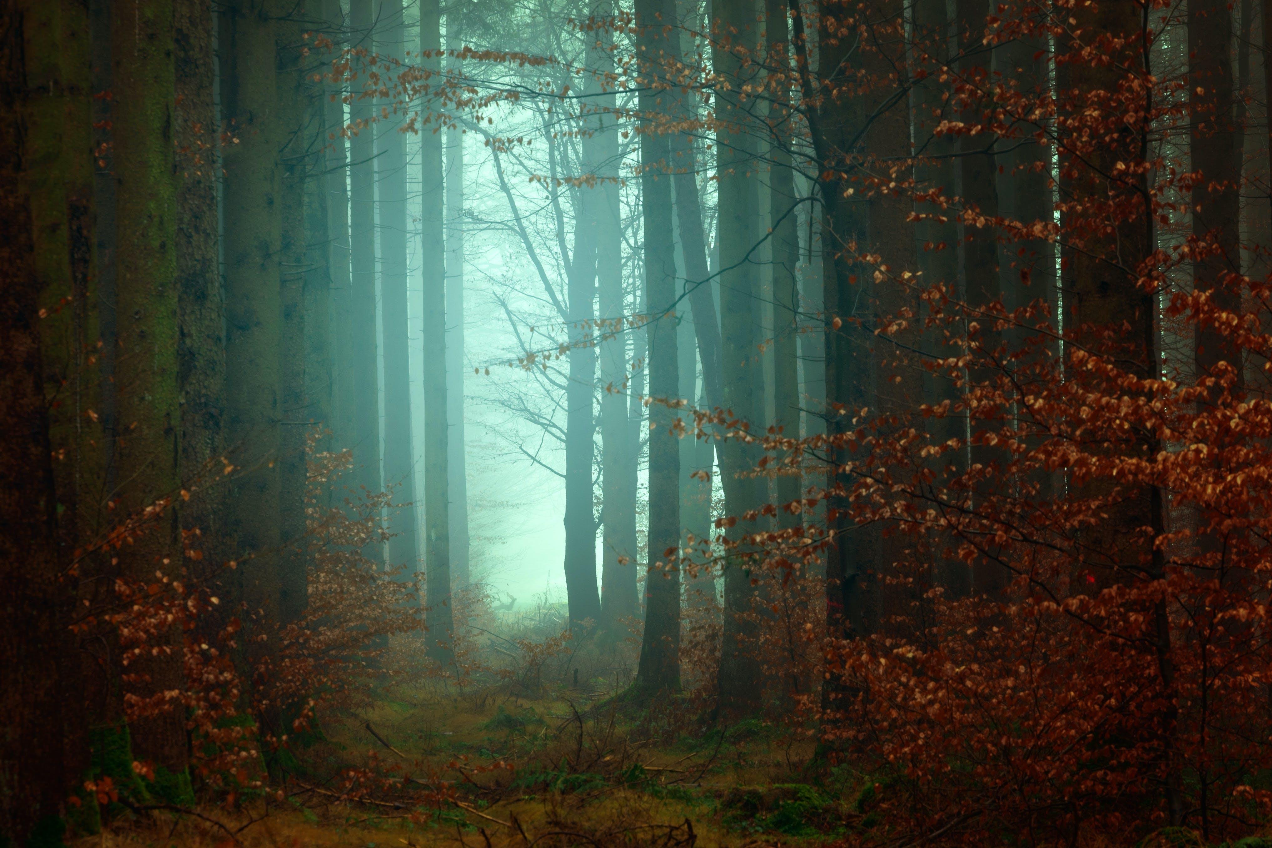 Foto profissional grátis de árvores, cênico, cor, enevoado