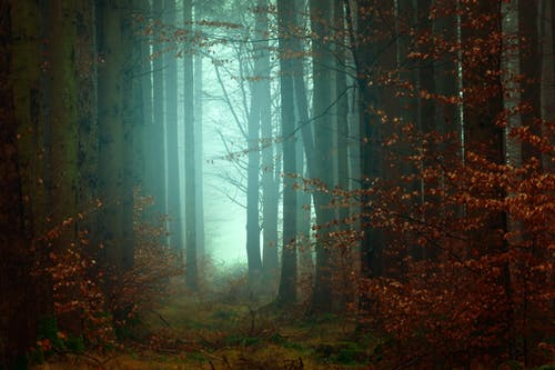 Photo of Woods With Fogs