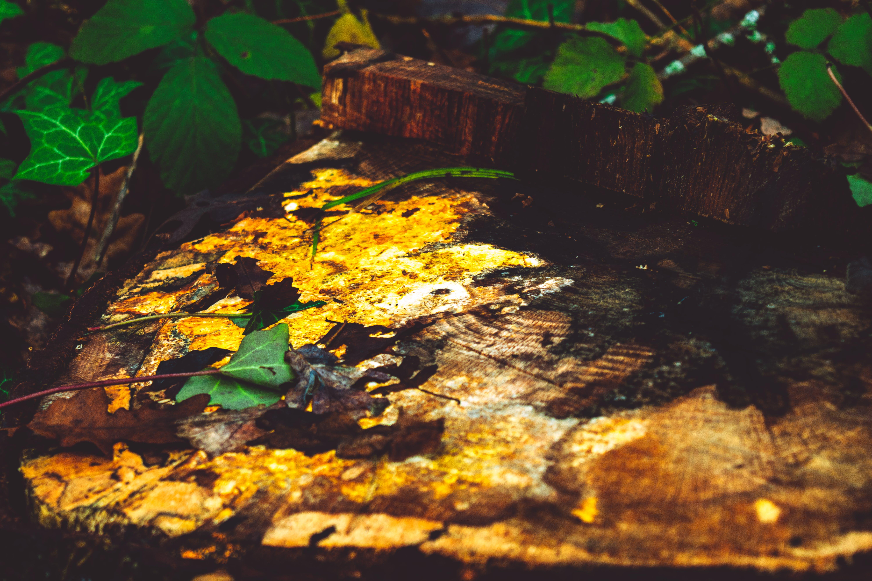 Δωρεάν στοκ φωτογραφιών με δασικός, κίτρινη, κομμένος κορμός, κρύο
