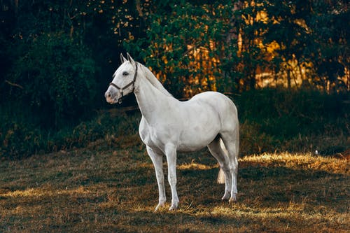 White Horse on Brown Grass Field