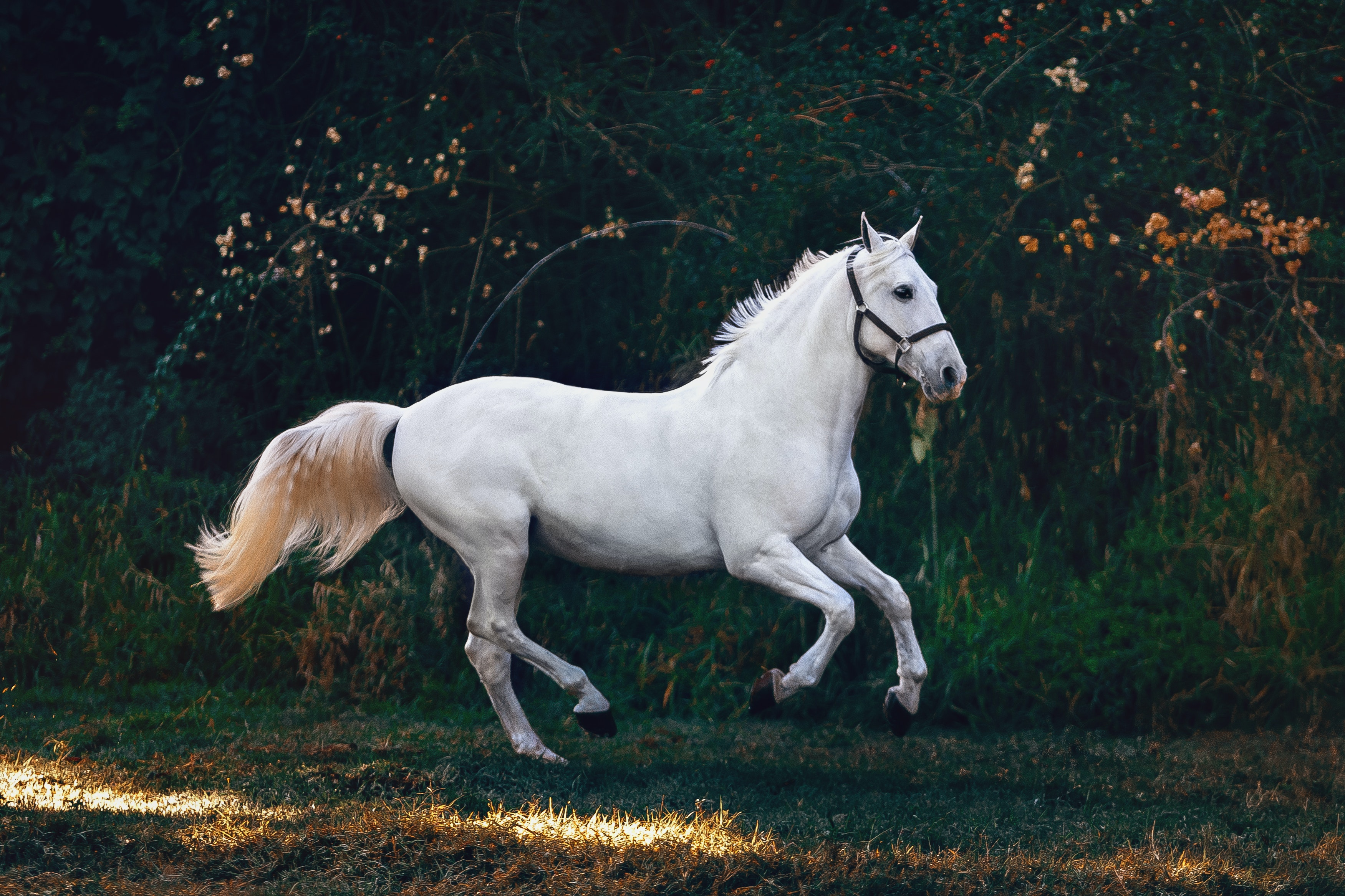 How fast a horse can run a mile