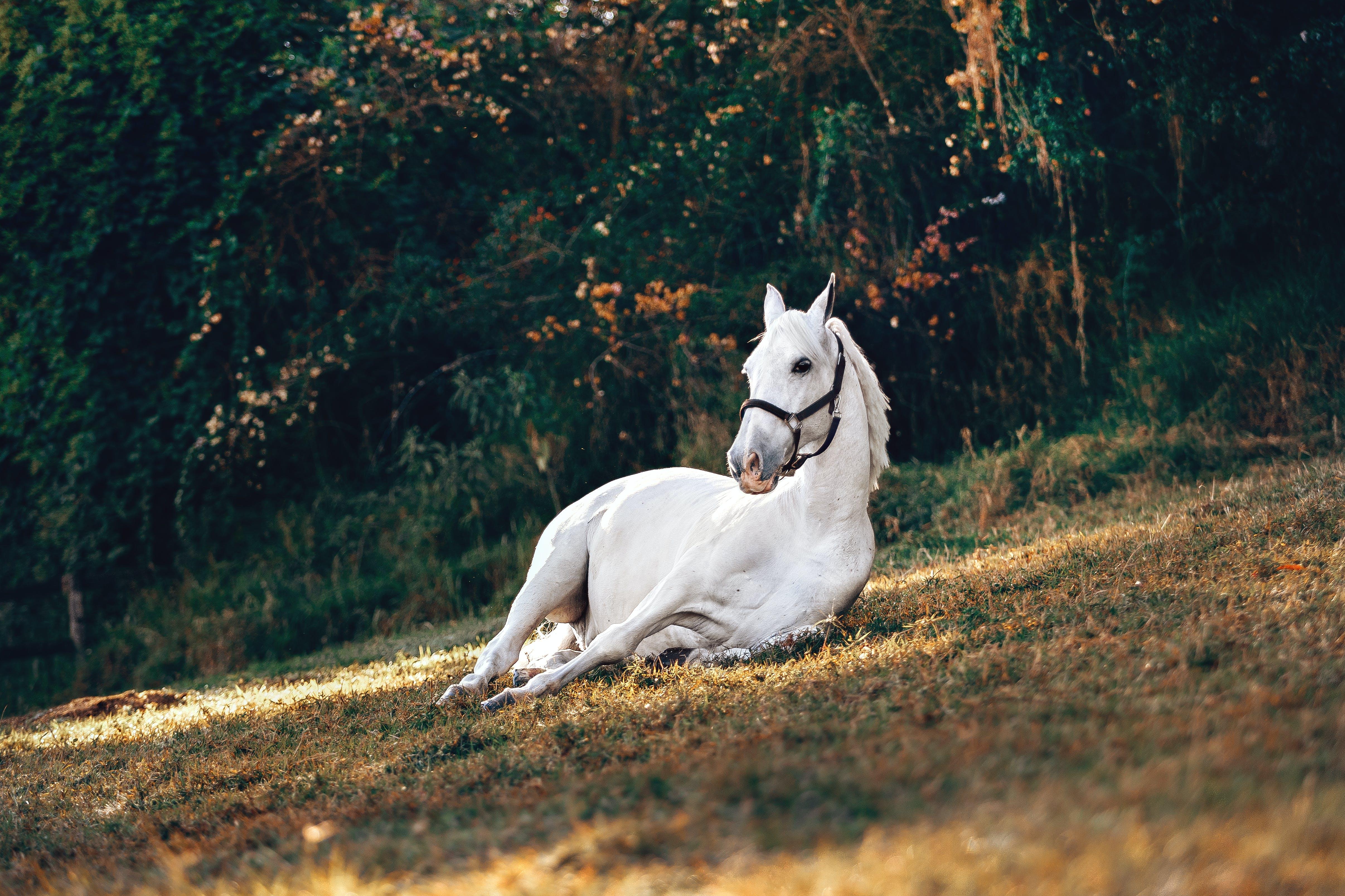 休息, 動物, 哺乳動物, 家畜 的 免费素材照片