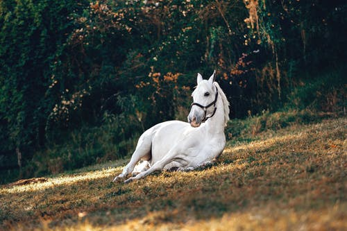 White Horse on Brown Grass