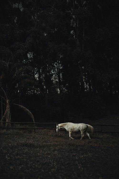 белая лошадь, вечер, движение