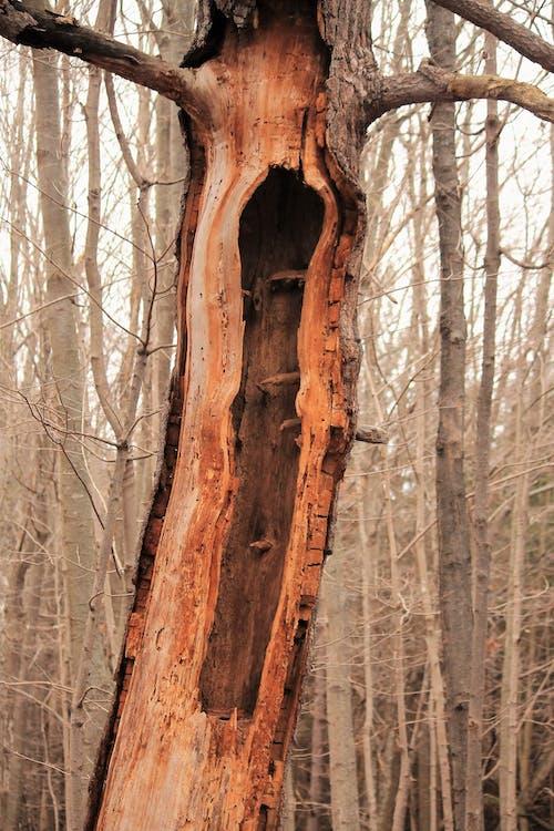 Ingyenes stockfotó halott fák, természet, üreges témában