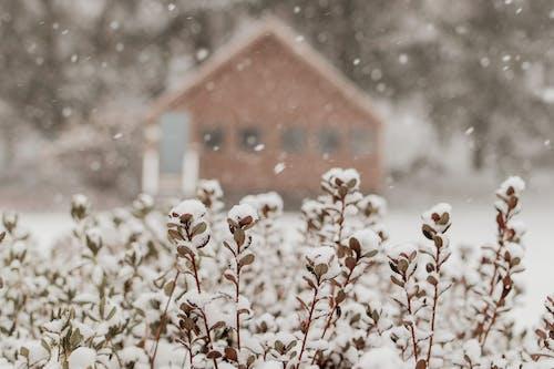 Foto profissional grátis de cabana, cinza, com frio, congelado