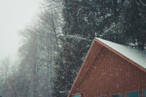 Foto profissional grátis de alpino, borrão, cabana, coberto de neve