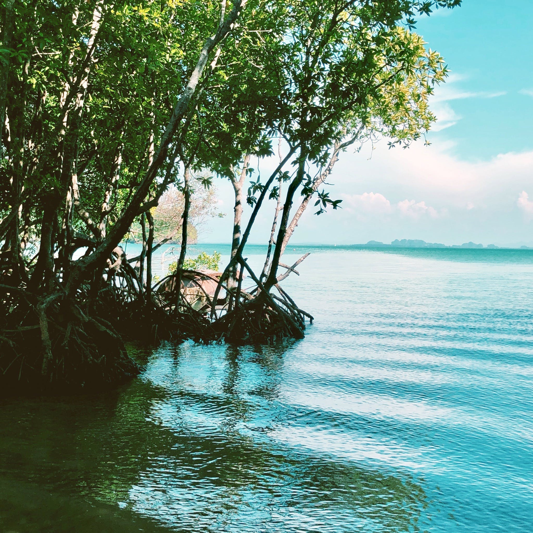 Free stock photo of beautiful, beauty in nature, Blue ocean, mangrove
