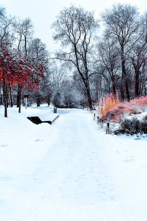 Free stock photo of Beautiful tree, beautiful trees in the Park, beautiful winter, central park