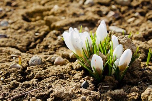 Бесплатное стоковое фото с весенние цветы