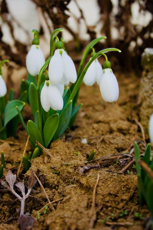 Bahar çiçekleri içeren Ücretsiz stok fotoğraf