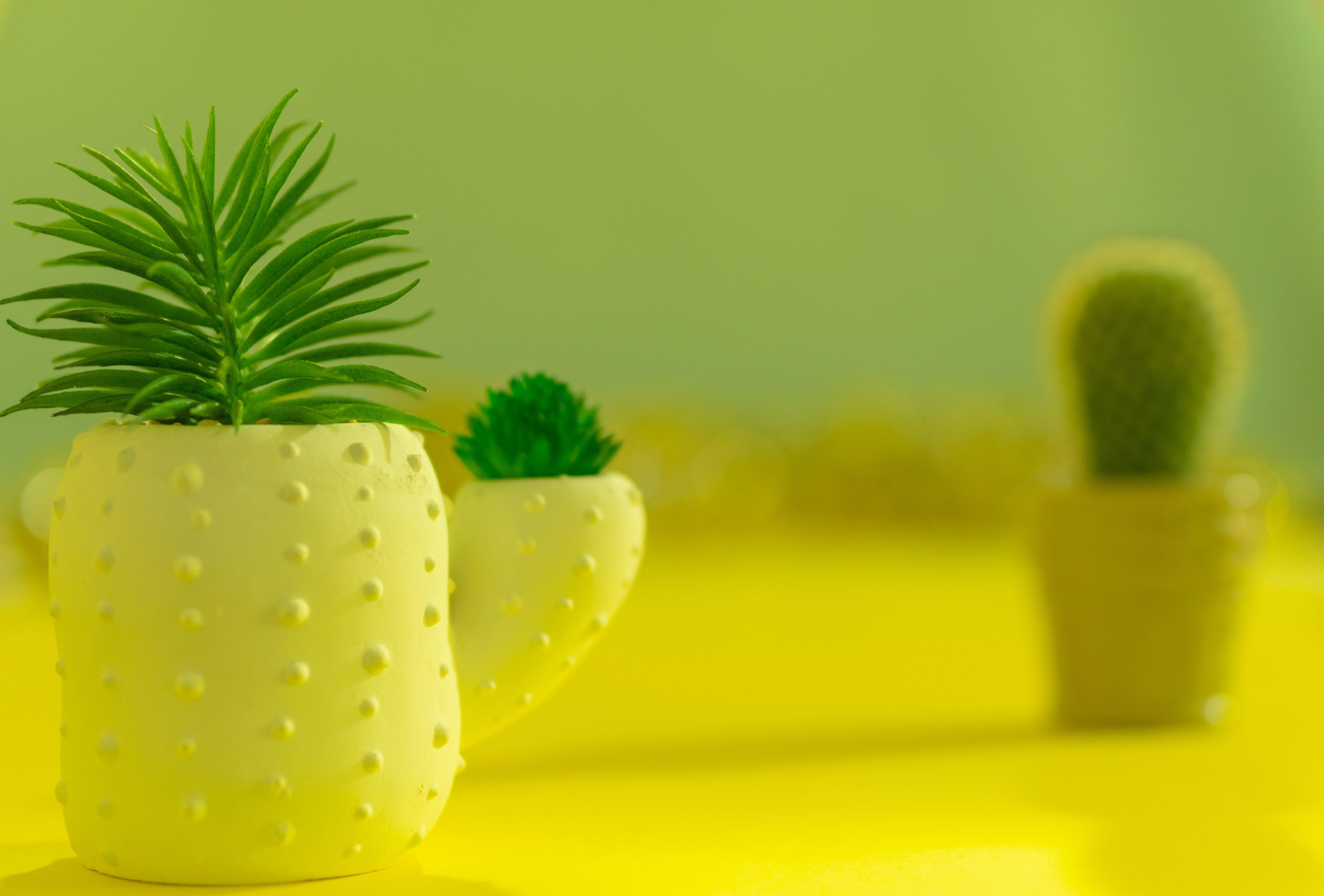 Free stock photo of cactus, cactus plant, cactus potplants, cactuses