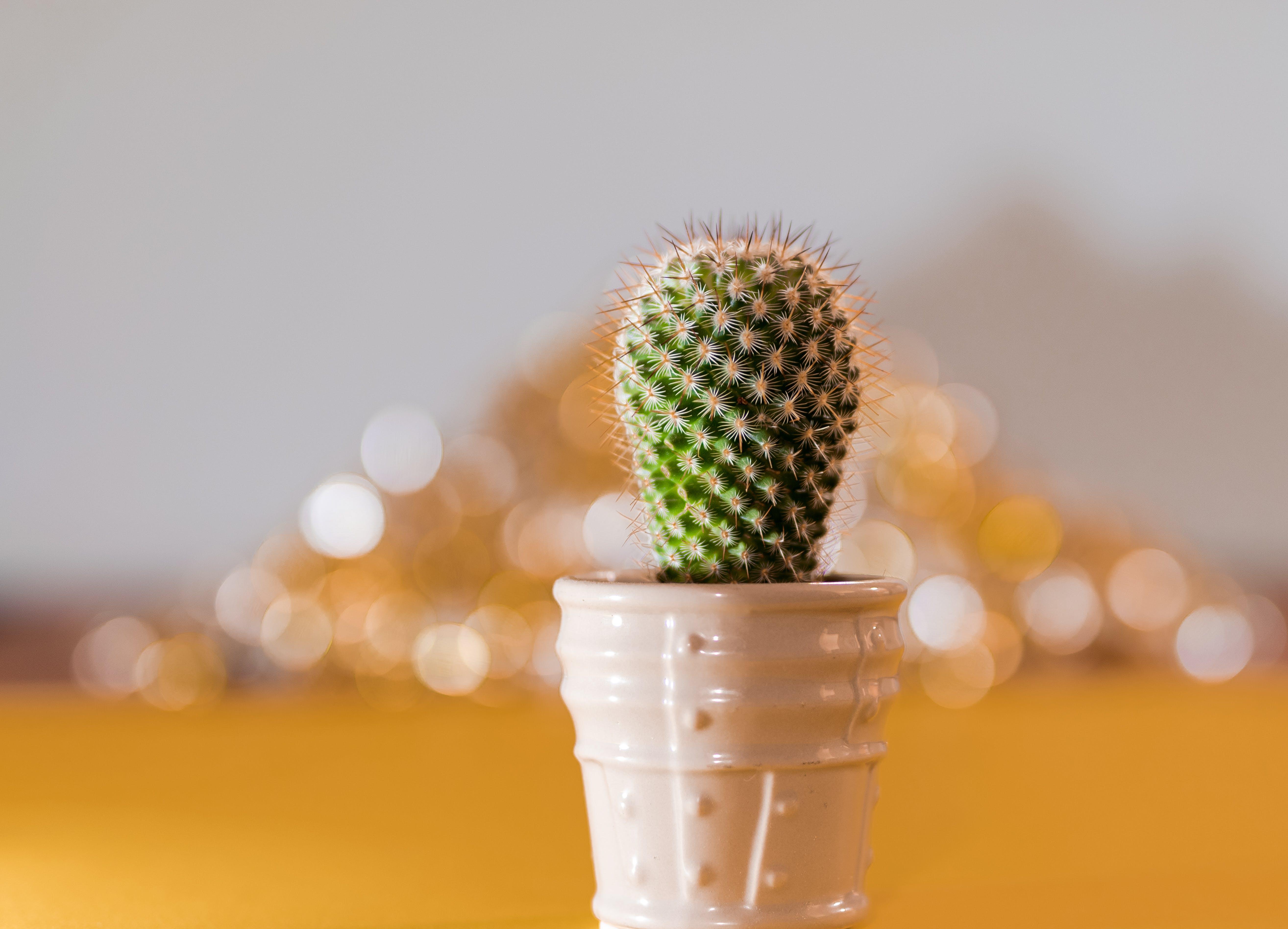 Free stock photo of cactus, cactus plant, cloudy skies, desert