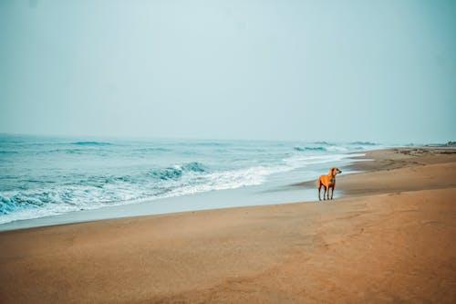 Fotos de stock gratuitas de arena, cachorro, en la playa, Fondo de pantalla 4k