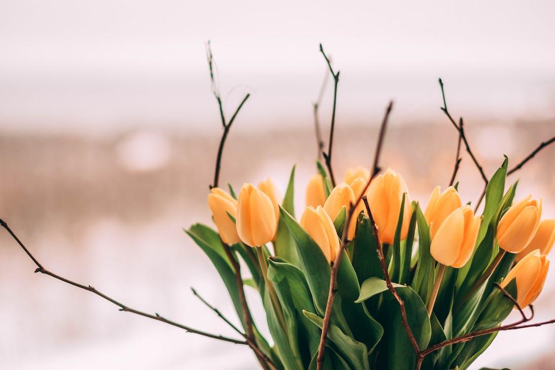 ботанический, красивые цветы, красивый