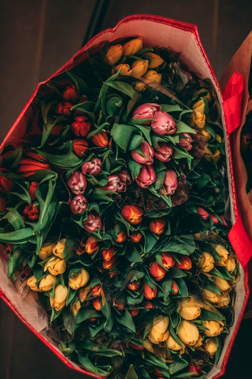 Red bag with beautiful multicolored delicate tulips