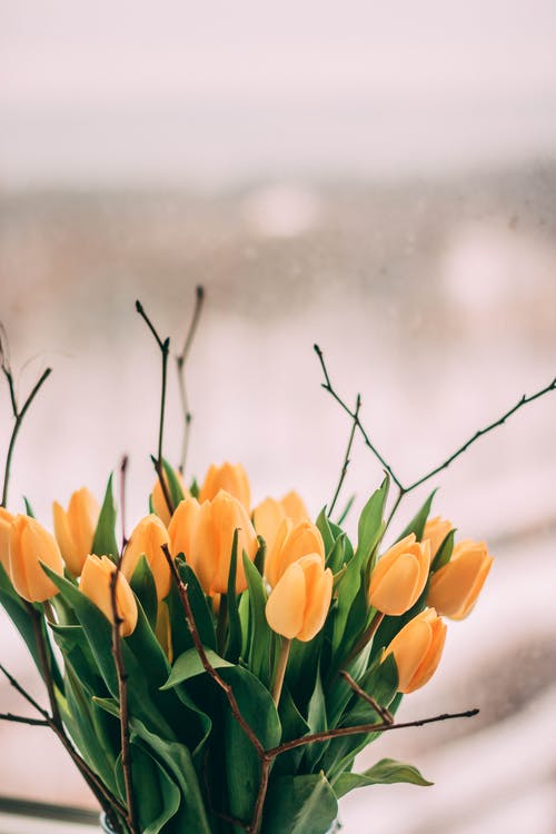 增長, 夏天, 夏季, 明亮 的 免費圖庫相片