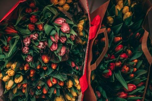 Foto profissional grátis de alforjes, botânico, brilhante, broto
