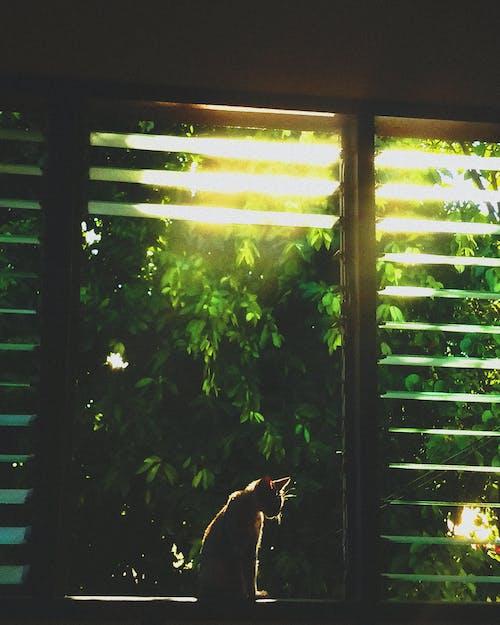 Foto stok gratis backlit, binatang, hewan peliharaan, kucing